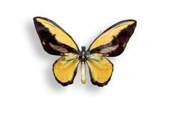 Un butterflie en blanco Foto de archivo libre de regalías