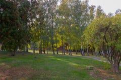 Un césped herboso en un parque cerca de una trayectoria con los árboles tuy y de abedul Imagenes de archivo