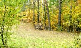 Un césped hermoso en bosque del pino Imagenes de archivo
