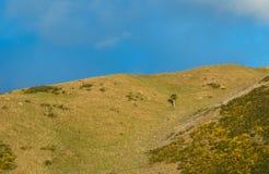 Un côté de colline d'arbre Image libre de droits