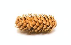 Un cône de pin Photos libres de droits