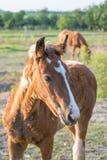 Un caballo imagenes de archivo