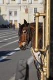 Un caballo aprovechado a un carro Imagenes de archivo