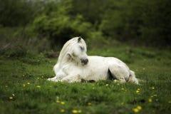 Un caballo blanco en un campo fotografía de archivo