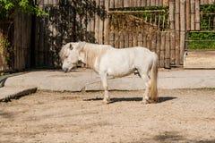 Un caballo blanco se coloca en el sol Fotos de archivo libres de regalías