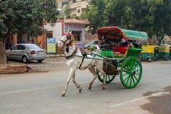 Un caballo compartido tiró del taxi en Agra, la India fotografía de archivo libre de regalías