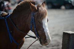 Un caballo con los ojos cerrados imagen de archivo