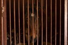 Un caballo con los ojos hermosos mira fijamente apagado en la distancia Pod?a ser un caballo solo triste fotografía de archivo