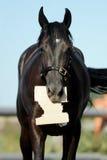 Un caballo con un trozo de papel en su boca Fotos de archivo