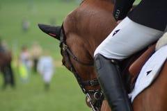 Un caballo de la doma y Rider Getting Warmed fino para arriba y listo para la competencia imágenes de archivo libres de regalías