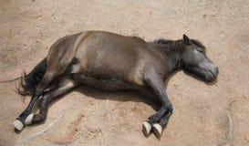 Un caballo de reclinación foto de archivo libre de regalías
