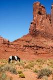 Un caballo delante de formaciones de una roca del rojo, los E.E.U.U. Foto de archivo libre de regalías