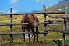 Un caballo detrás de una cerca Fotografía de archivo