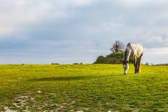 Un caballo en un campo fotos de archivo libres de regalías