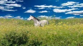 Un caballo solitario en un día hermoso Imágenes de archivo libres de regalías