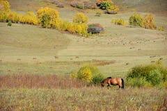Un caballo en pradera del otoño Foto de archivo libre de regalías
