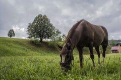 Un caballo en Ucrania occidental Imagen de archivo libre de regalías