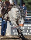 Un caballo flojo Foto de archivo libre de regalías