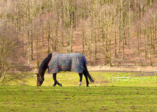Un caballo hermoso Fotos de archivo