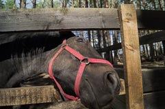 Un caballo loooking amistoso imágenes de archivo libres de regalías