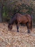 Un caballo nombró Omega fotos de archivo libres de regalías
