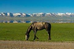 Un caballo pasta en un prado verde Imagen de archivo libre de regalías