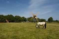 Un caballo que pasta en un molino de viento Fotos de archivo