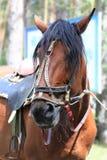Un caballo triste del parque - él ` s atado y cansado Fotografía de archivo libre de regalías