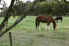 Un caballo y un burro Foto de archivo libre de regalías
