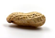 Un cacahuete aislado Imágenes de archivo libres de regalías