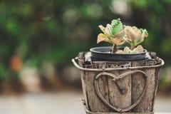 Un cactus dans le pot sur le fond de bokeh Image libre de droits