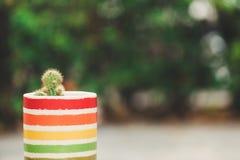 Un cactus dans le pot sur le fond de bokeh Image stock