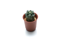 Un cactus dans un pot avec complètement de pierre d'oragne à l'arrière-plan blanc Photographie stock