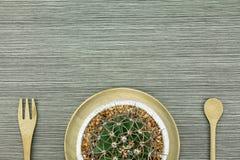 Un cactus en el pote de arcilla blanco, plantas interiores con el espacio de la copia Fotografía de archivo