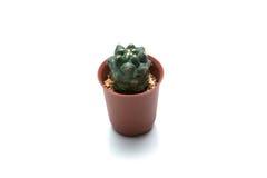 Un cactus en un pote con por completo de la piedra del oragne en el fondo blanco Fotografía de archivo