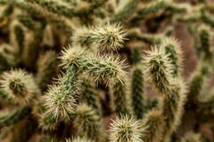 Un cactus grande con las espinas en el fondo espinoso salvaje fotos de archivo