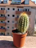 Un cactus piccolo in un piccolo vaso immagine stock