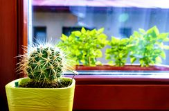 Un cactus redondo espinoso que mira hacia fuera la ventana imagen de archivo libre de regalías