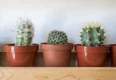 Un cactus sveglio di tre cactus su uno scaffale Fotografie Stock