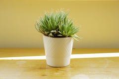 Un cactus in un vaso bianco su un piano di lavoro di legno immagine stock
