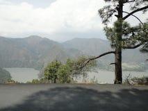 Un cadeau précieux de nature à la terre est un arbre debout dans l'intervalle de route et de lac Image libre de droits