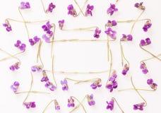 Un cadre de petite forêt fleurit les violettes pourpres sur le fond blanc avec l'espace pour le texte Photo stock