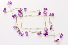 Un cadre de petite forêt fleurit les violettes pourpres sur le fond blanc avec l'espace pour le texte Images stock