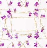Un cadre de petite forêt fleurit les violettes pourpres sur le fond blanc avec l'espace pour le texte Photographie stock