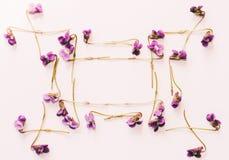 Un cadre de petite forêt fleurit les violettes pourpres sur le fond blanc, moquerie pour le texte, pour des expressions, pour mar Images libres de droits