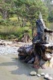 Un cairn de marque de mer est construit placé sur un tronçon d'arbre Pacifique massif photo libre de droits