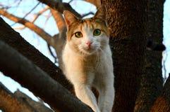 Un calicò Cat Looks alla macchina fotografica da un albero Fotografia Stock Libera da Diritti