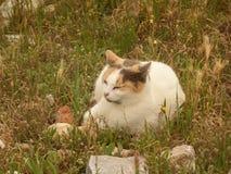 Un calicot mignon Cat Napping sur le champ de l'Acropole, Athènes Image stock