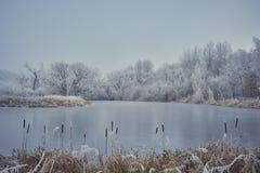 Un calme, étang congelé avec le cattail images libres de droits