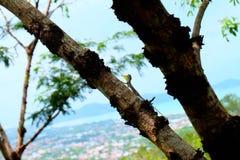 Un camaleón Imagen de archivo libre de regalías